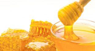 Qu'est-ce qu'un honeypot(«pot de miel en français» pour déjouer des cyberattaques)?